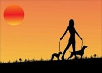 dog walking-home pet sitting - 1